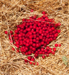 <I>Griottes sur paille (Morello Cherries on Straw</I><br>Mendocino, California, 2014<br><br>GC0386