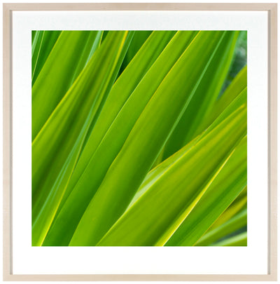 <I>Texture 7: Chlorophyll</I><br>Big Island, Hawaii, 2016<br><br>GC0404