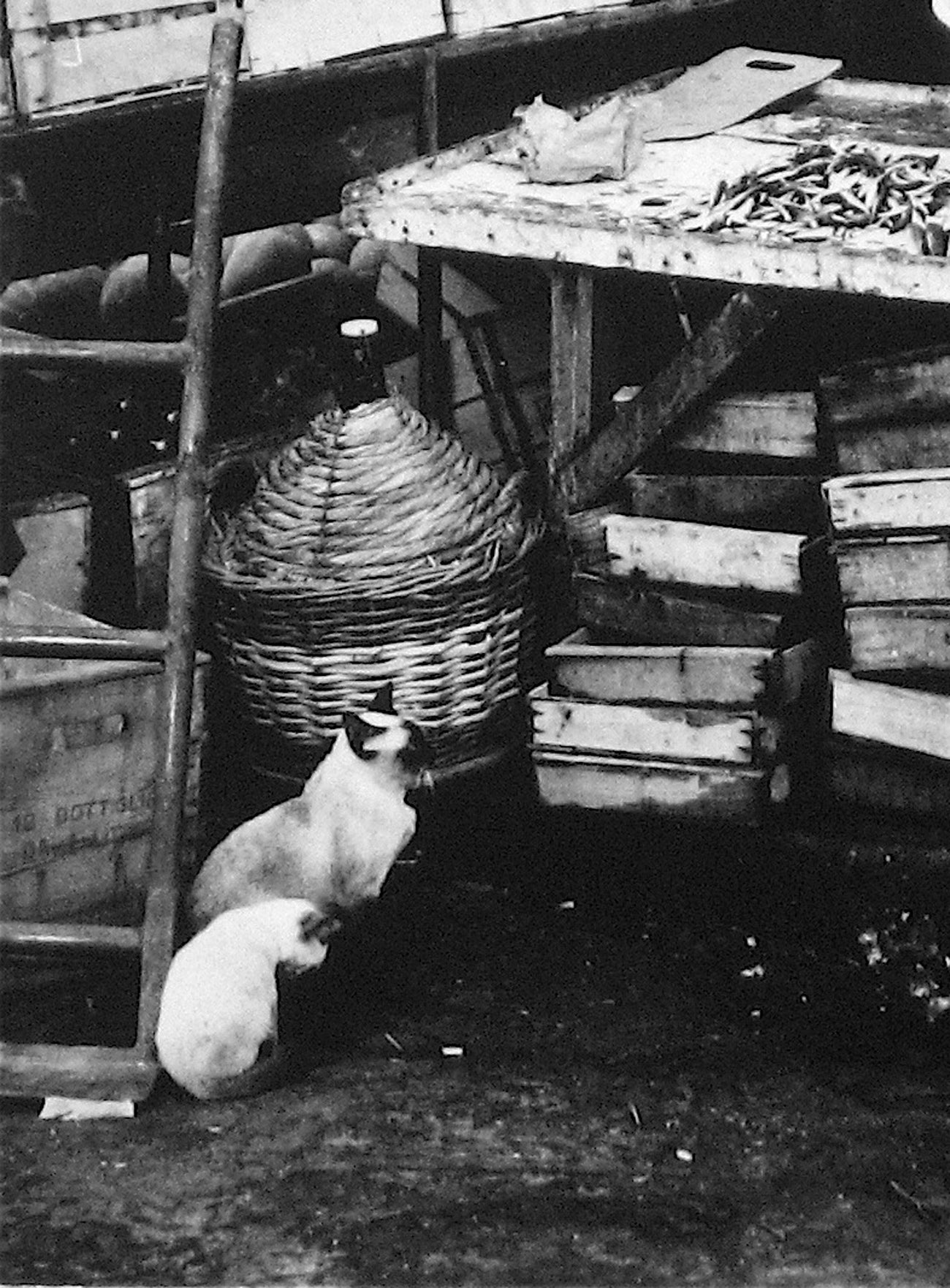 Market Table with Siamese Two Cats<br>1960s Photograph<br><br>#12095