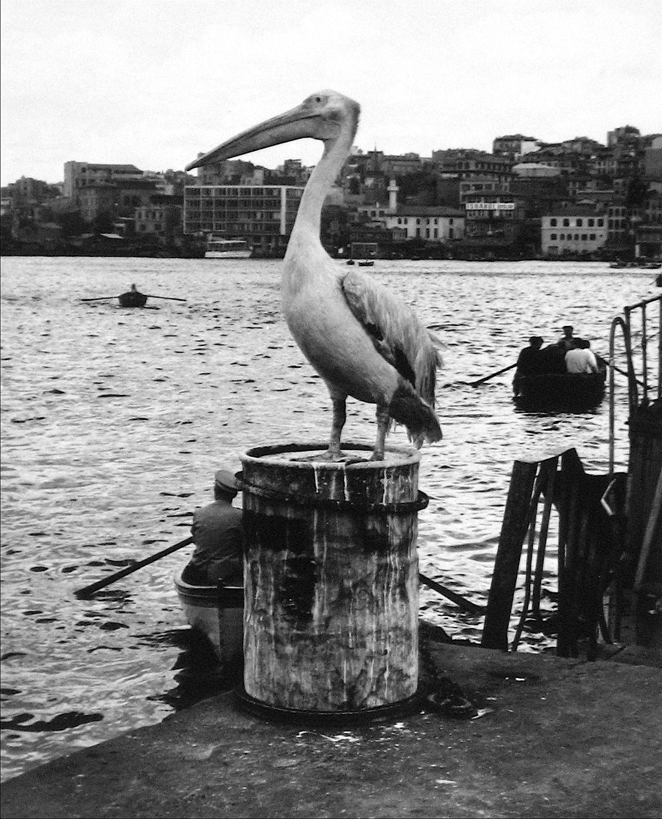 Pelican on the Dock<br>1960s Photograph<br><br>#12156