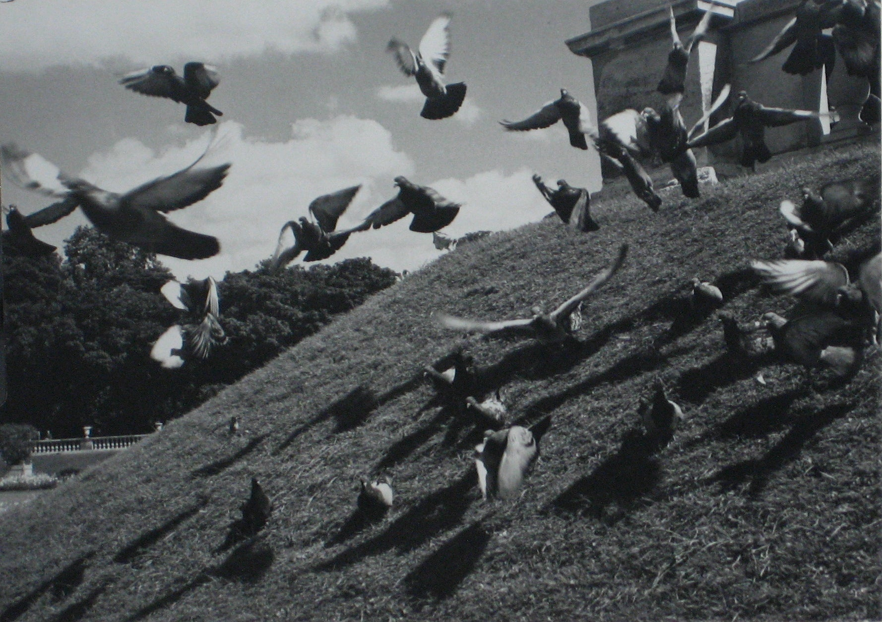 Birds in Flight<br>1960s Photograph<br><br>#12224