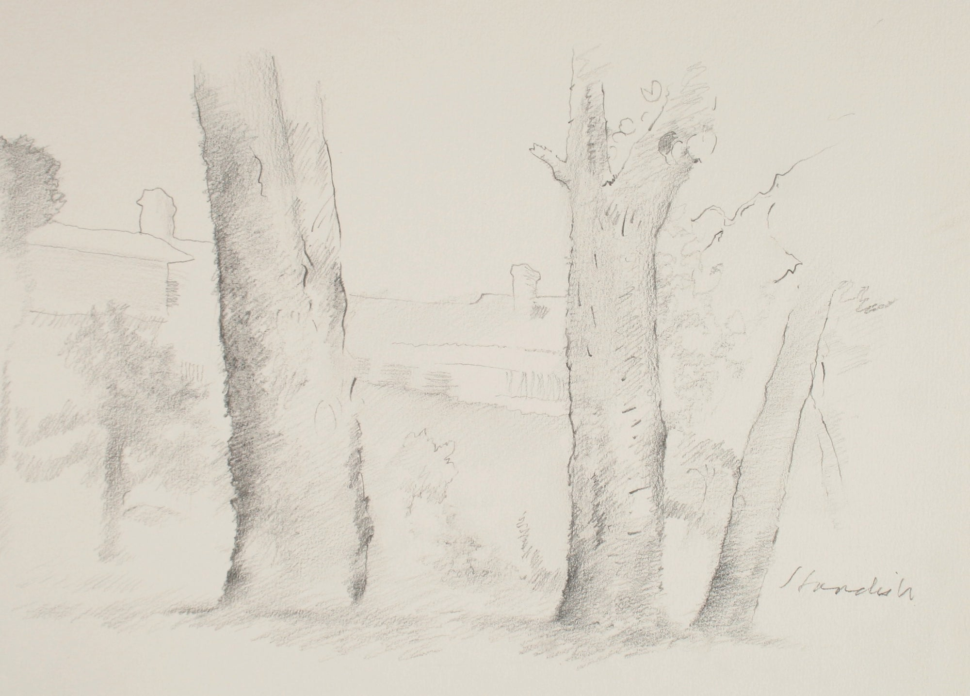 Three Trees <br>Late 20th Century Graphite <br><br>#71504