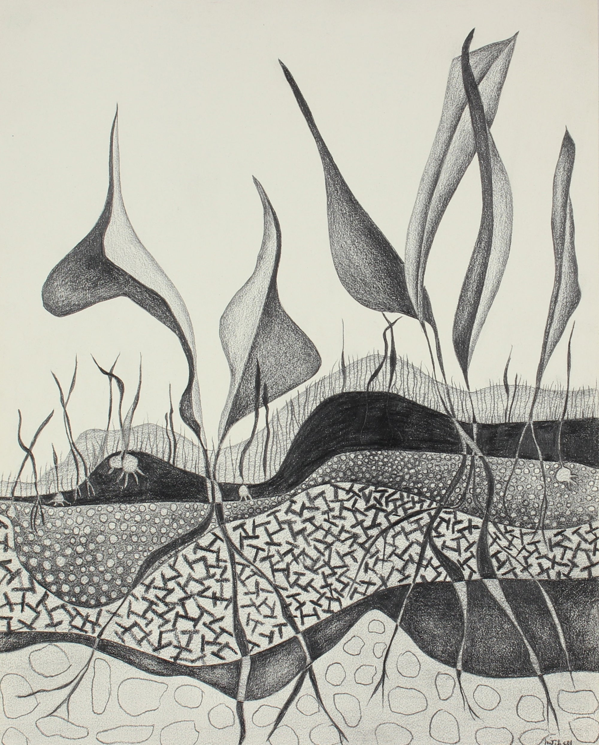 Leaves & Roots<br> 1975 Graphite Drawing<br><br>#86296