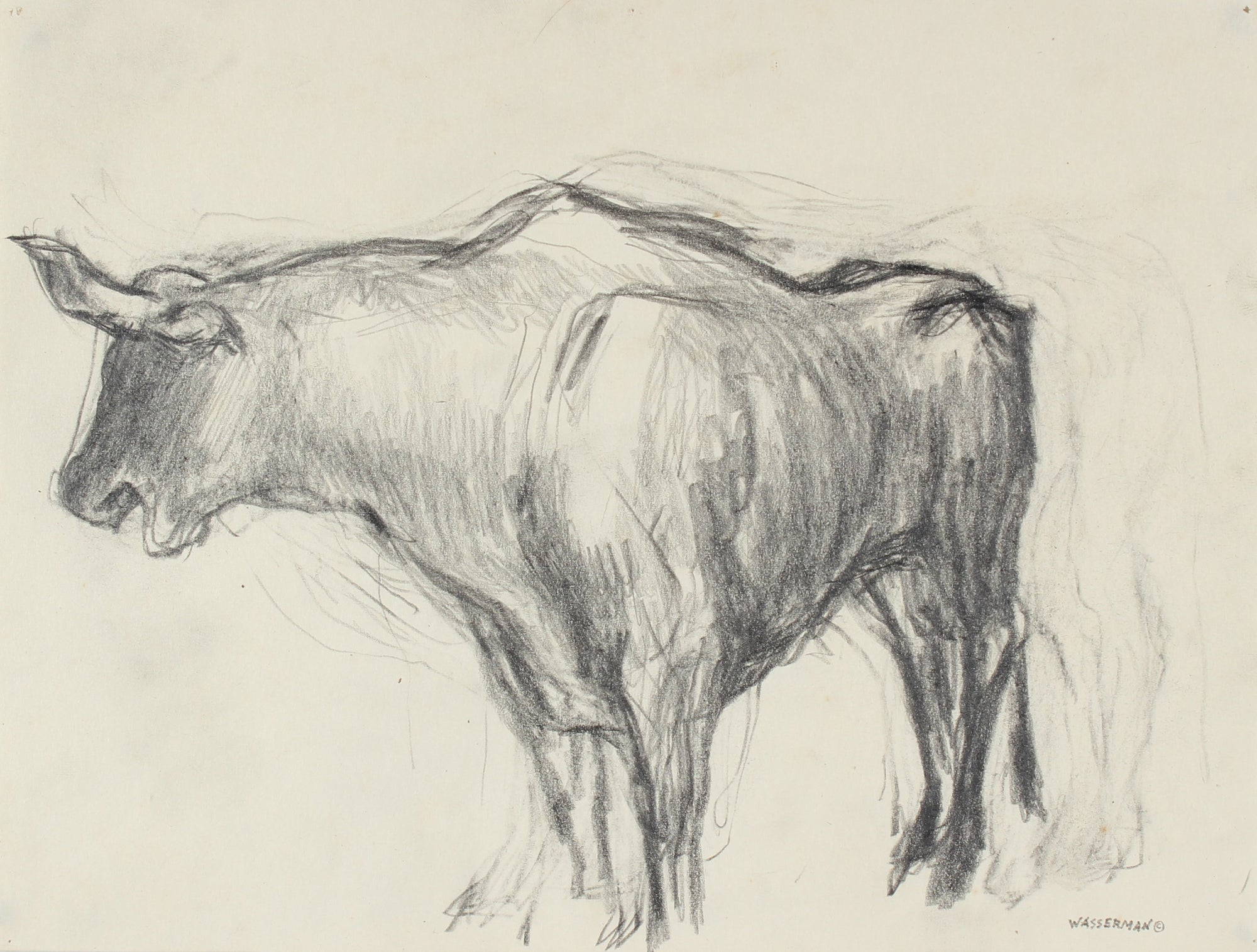 Bull Drawing, Mexico <br>1947 Graphite on Paper <br><br>#86545