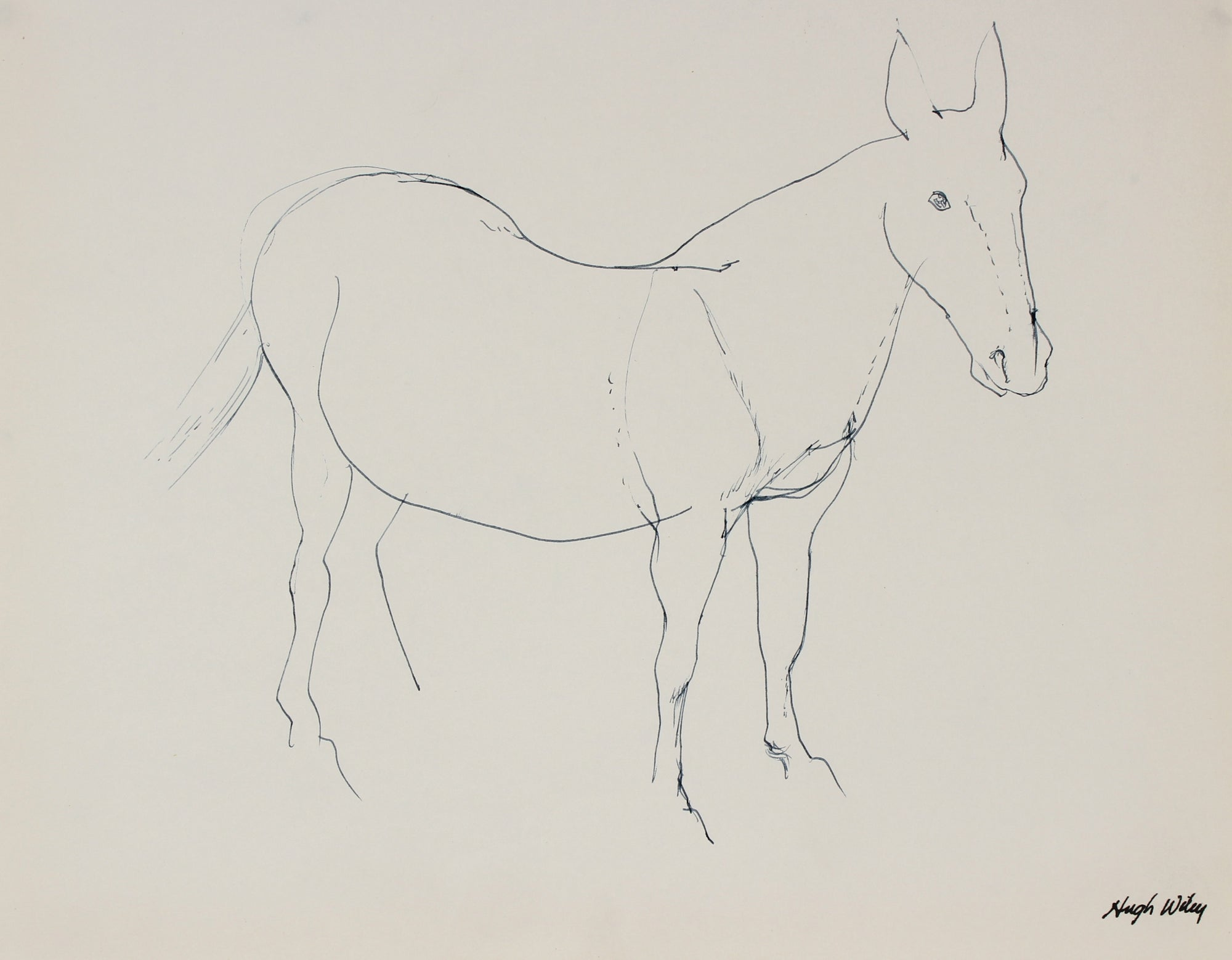 Monochromatic Horse Drawing<br>1974 Ink <br><br>#89410