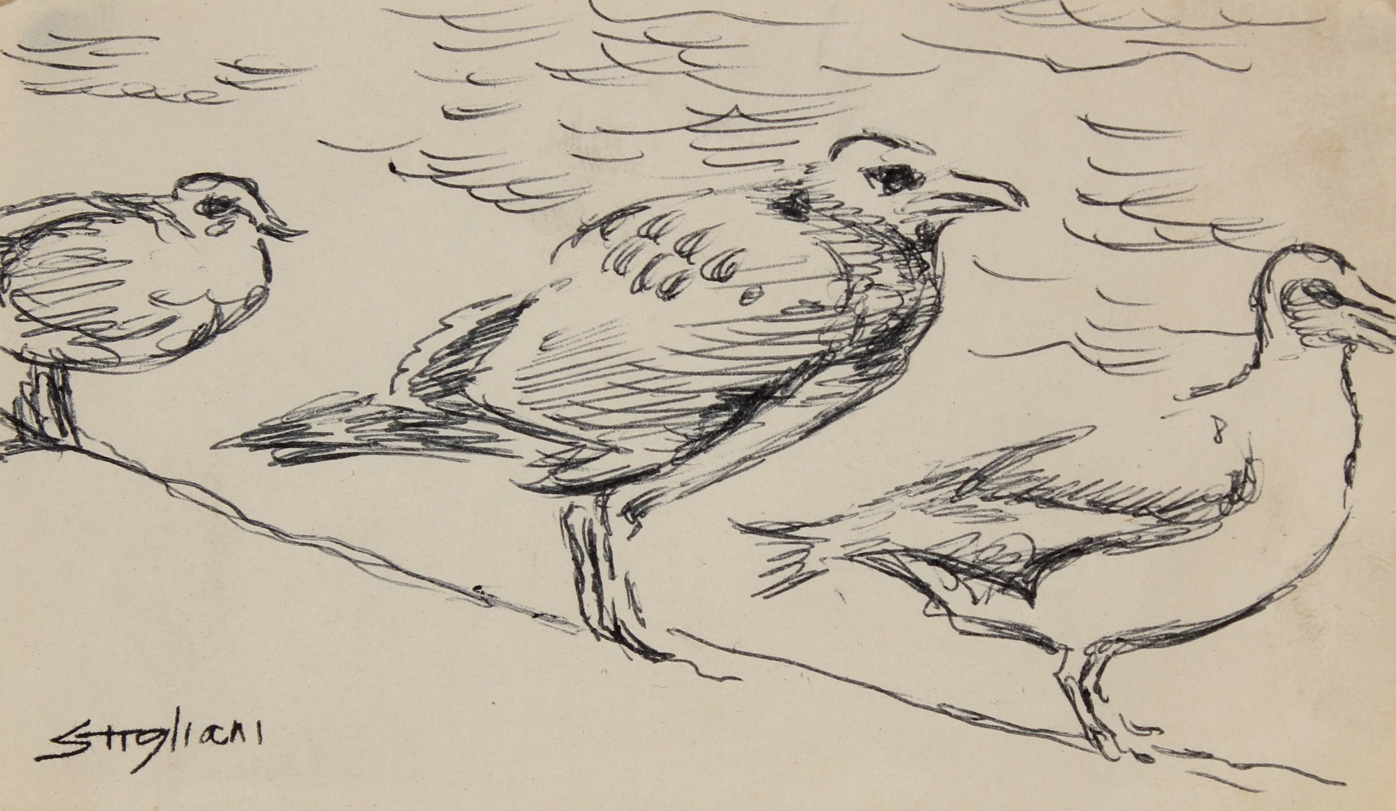 Birds by the Shore <br>20th Century Ink <br><br>#90470