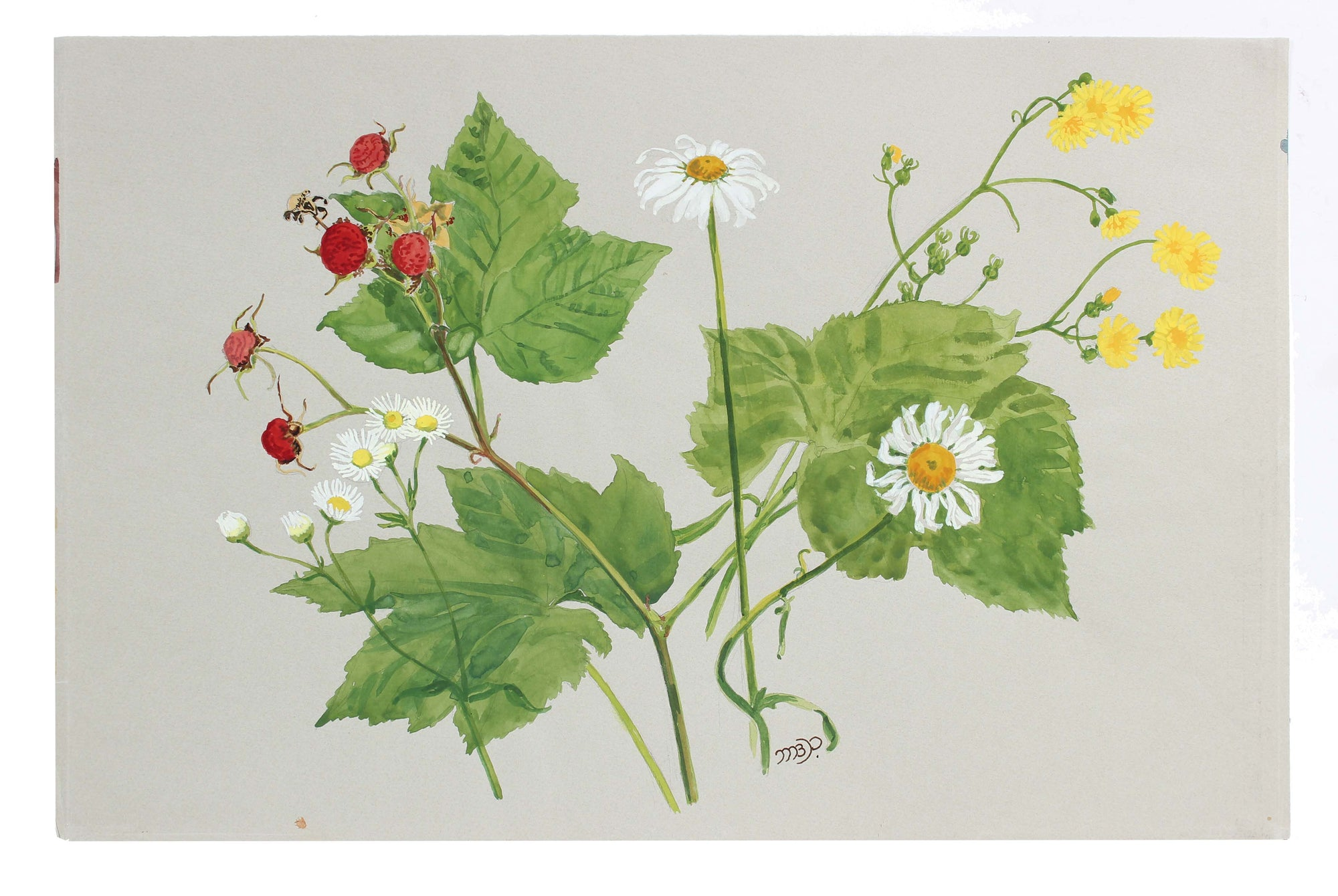 <i>Flower in Our Camp</i><br>Mid - Late 20th Century Watercolor<br><br>#A3608