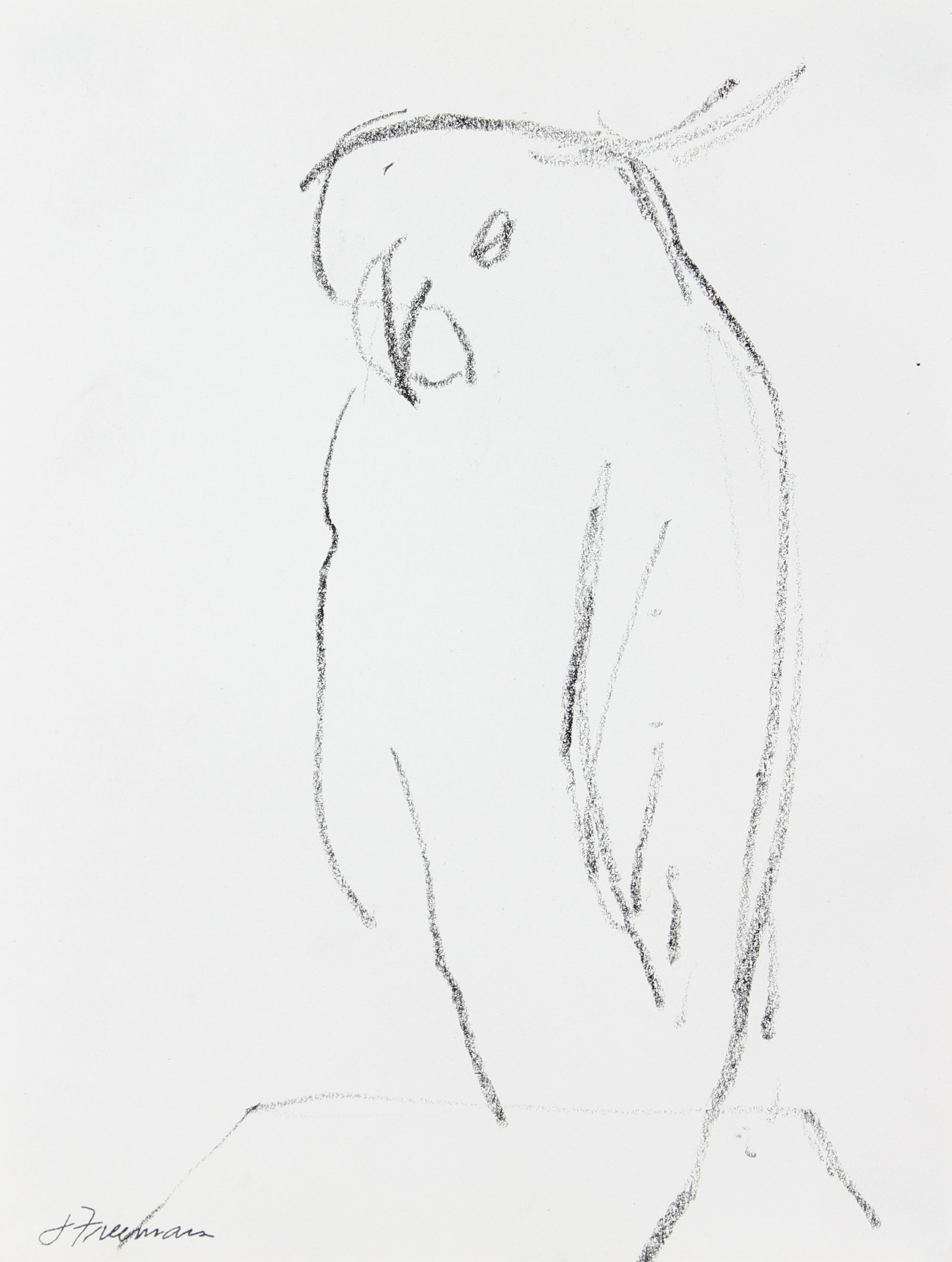 Sketch of a Parrot <br>20th Century Graphite <br><br>#A5030