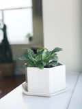 White Hexagon Planter
