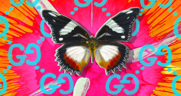 ArtSugar Welcomes David Stesner & The Butterfly Project