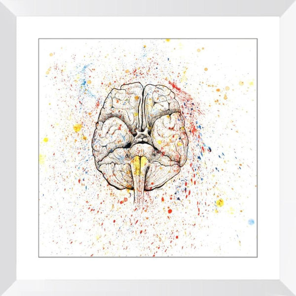 Anatomical Brain Splatter - 14x14 / White Frame / Buy - Limited Edition Print