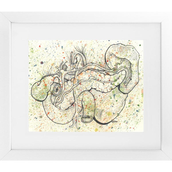 Anatomical Pancreas Splatter - 14x16 / White Frame / Rent - Limited Edition Print