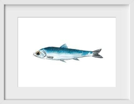 Anchovy - 14x16 / White Frame / Buy - Limited Edition Print
