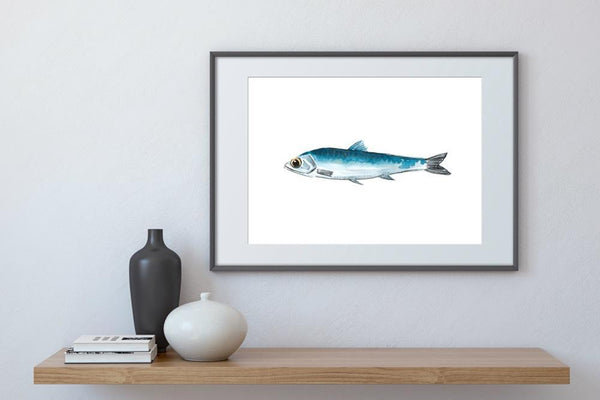 Anchovy - Limited Edition Print
