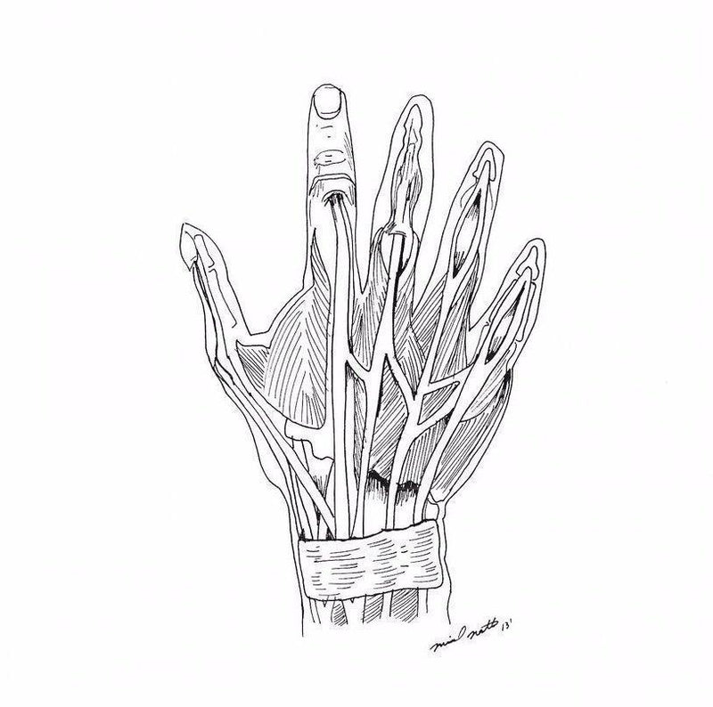 Hand Anatomy - 8x8 / unframed / Buy - Limited Edition Print
