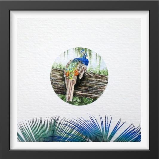 Peacock - 14x16 / Black Frame / Buy - Limited Edition Print
