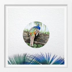 Peacock - 14x16 / White Frame / Buy - Limited Edition Print
