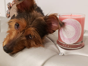 The Unconditional Candle - Large Size - 14 oz