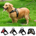 PetLife™ Dog Harness