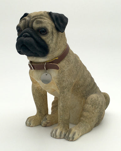 Pug Lesser Pavey Dog Studies Front Side