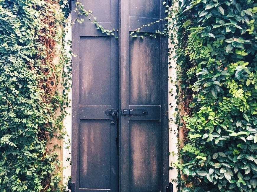 black shutters covered in vines