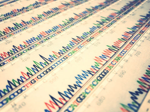 DNA sequence on paper