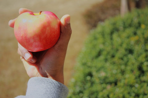 Hand holding apple in front of bush