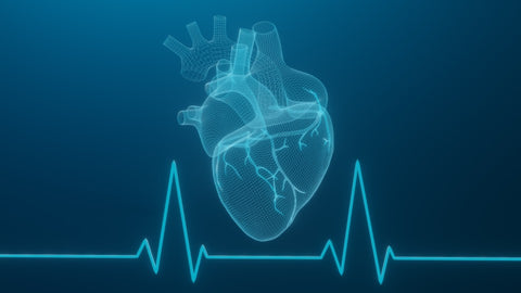 Blueprint of human heat with heart rate underneath