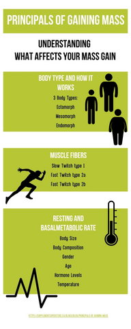 Infographic on the principals of gaining muscle mass