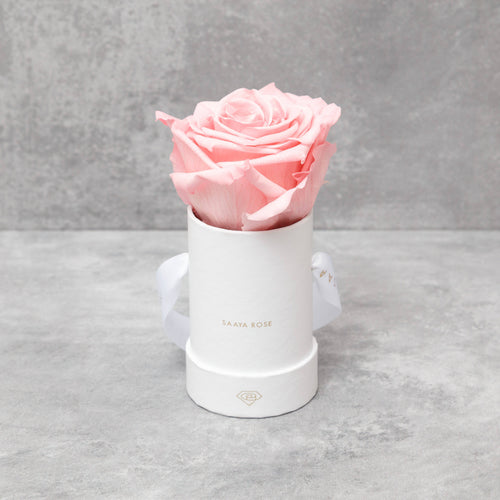 Single Blush Rose (White Box)