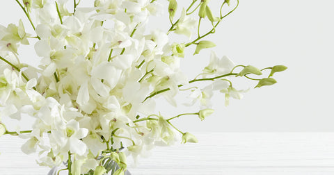 white dendrobium orchid flowers