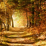 Autumn Walk Fragrance Oil