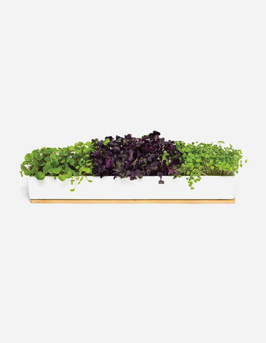 Urban Greens - Microgreens Windowsill Box Kit
