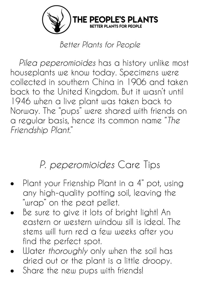 The People's Plants -Pilea Pro Tips