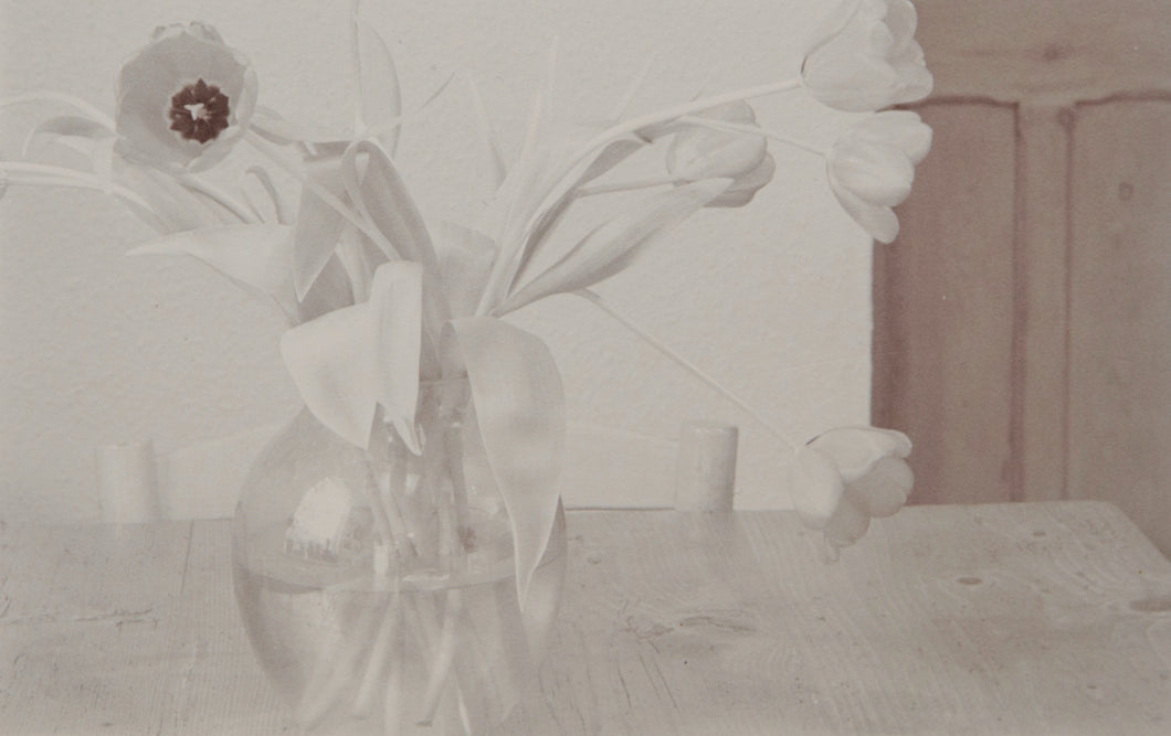Tulipa Kitchen Series - 8