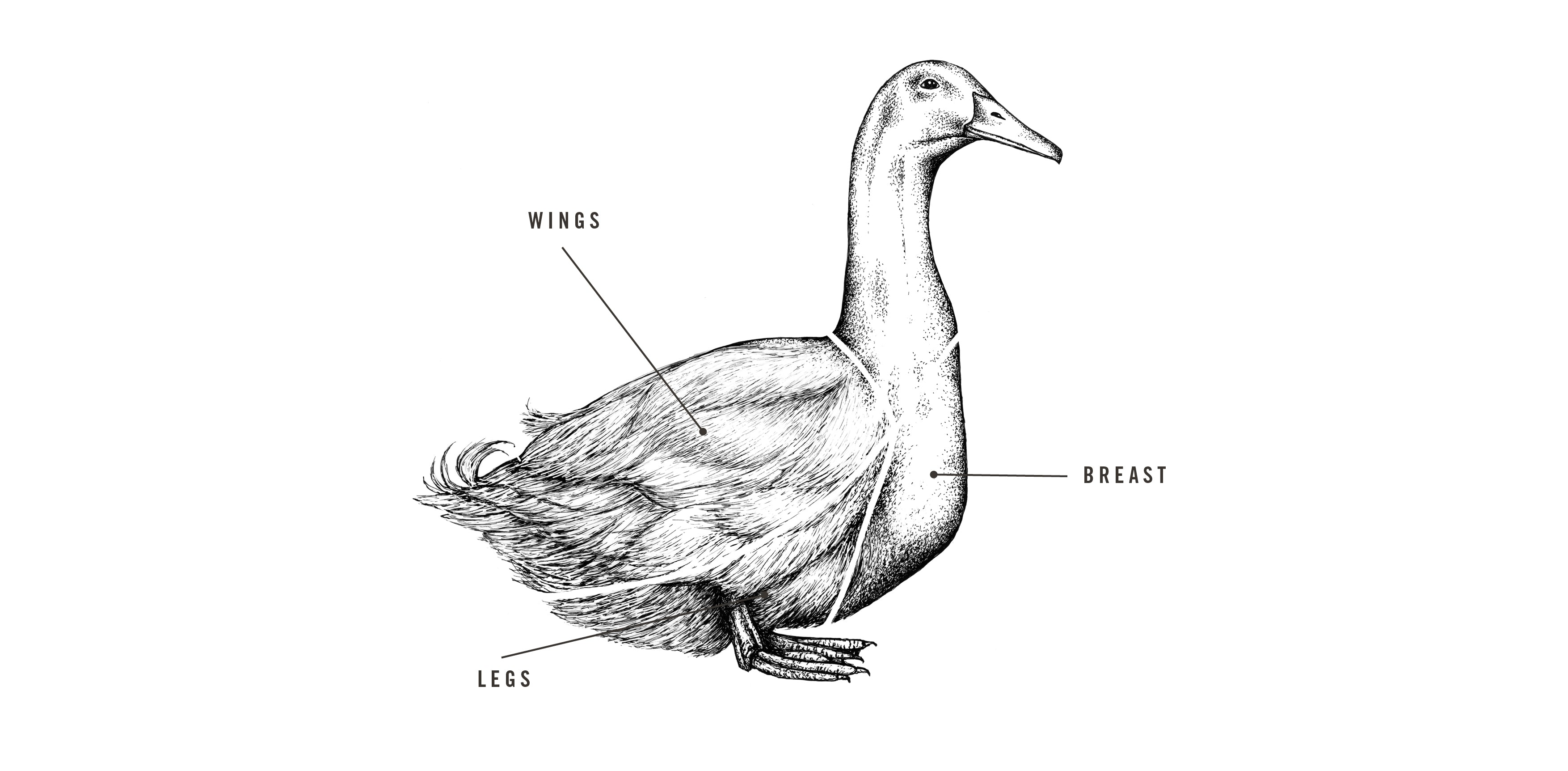 Free Range Whole Duck meat cuts diagram