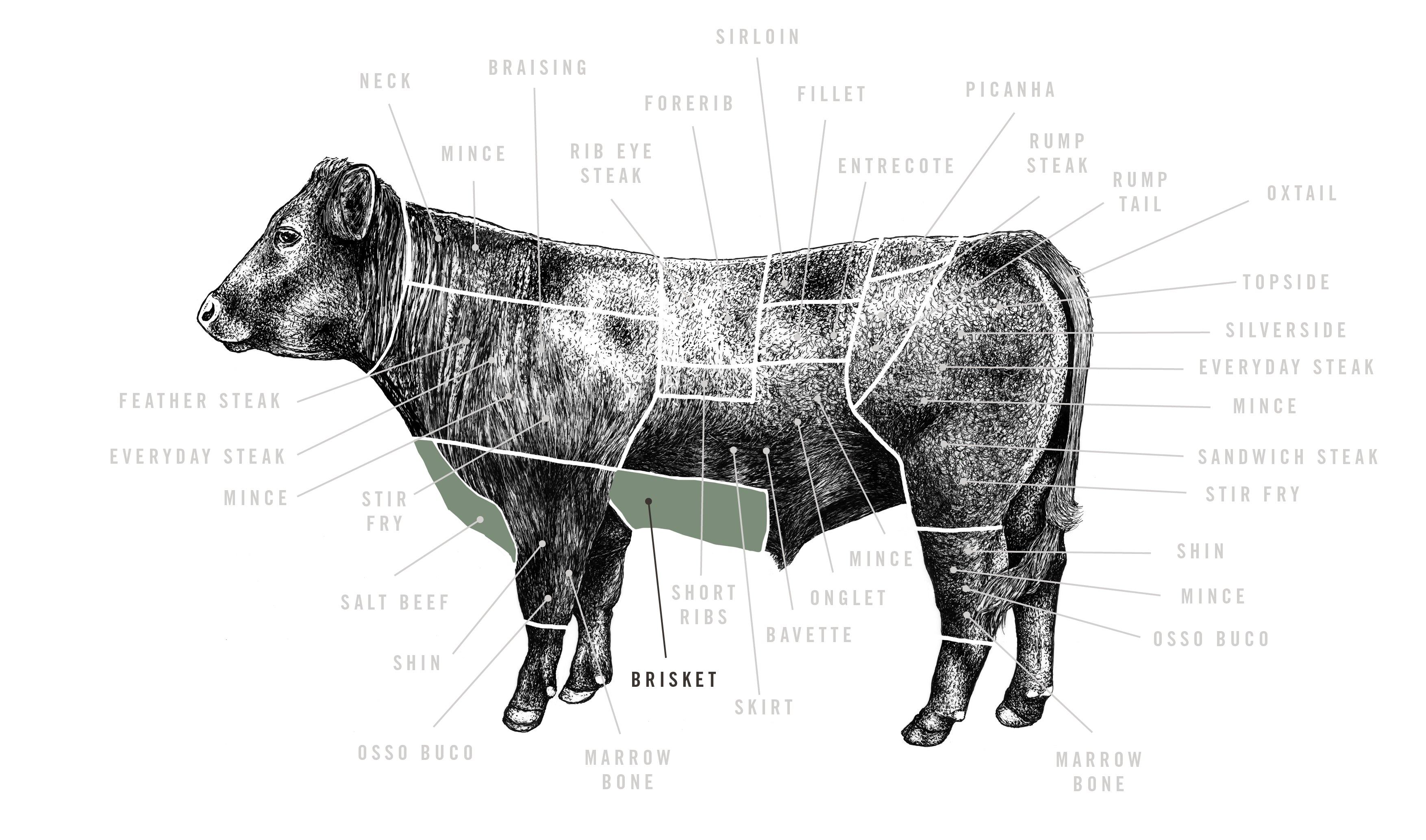 Grass Fed Beef Brisket meat cuts diagram