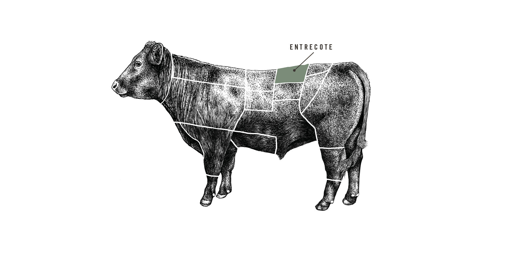Grass Fed Beef Entrecote Steak meat cuts diagram