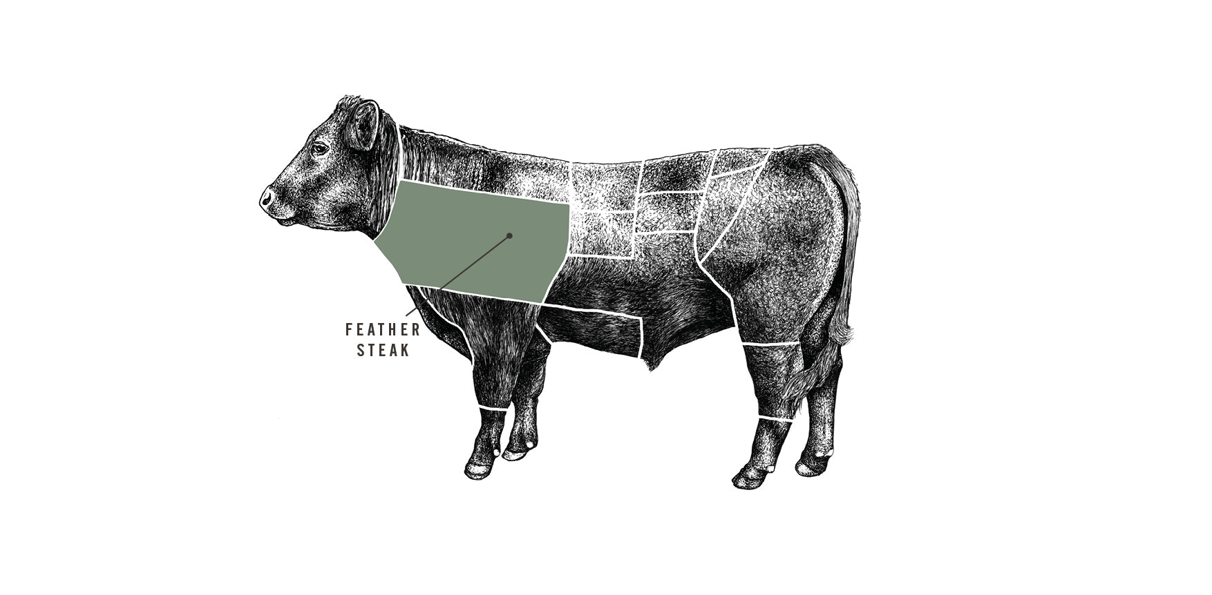 Grass fed Beef Feather Steak meat cuts diagram