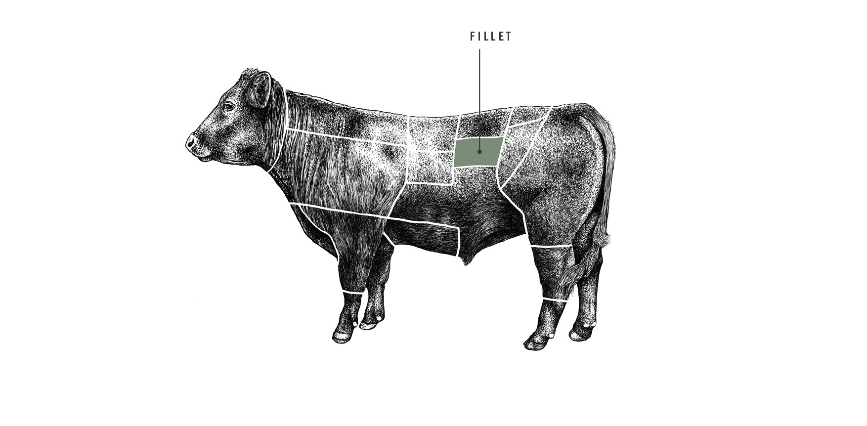Grass Fed Beef Fillet meat cuts diagram
