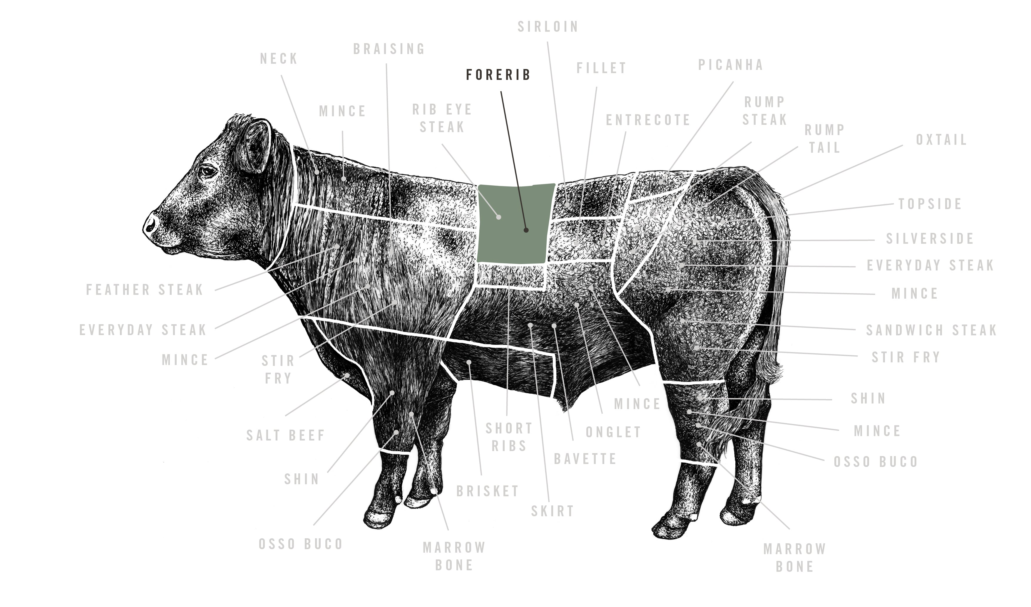 Grass Fed Rib of Beef meat cuts diagram