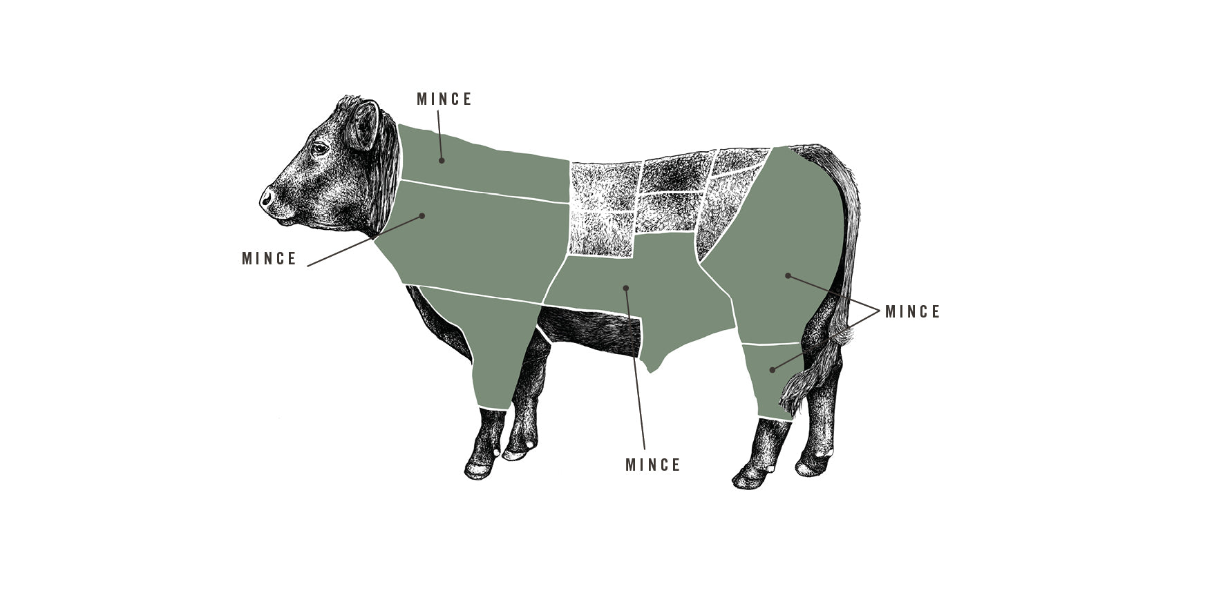 Grass Fed Beef Mince meat cuts diagram