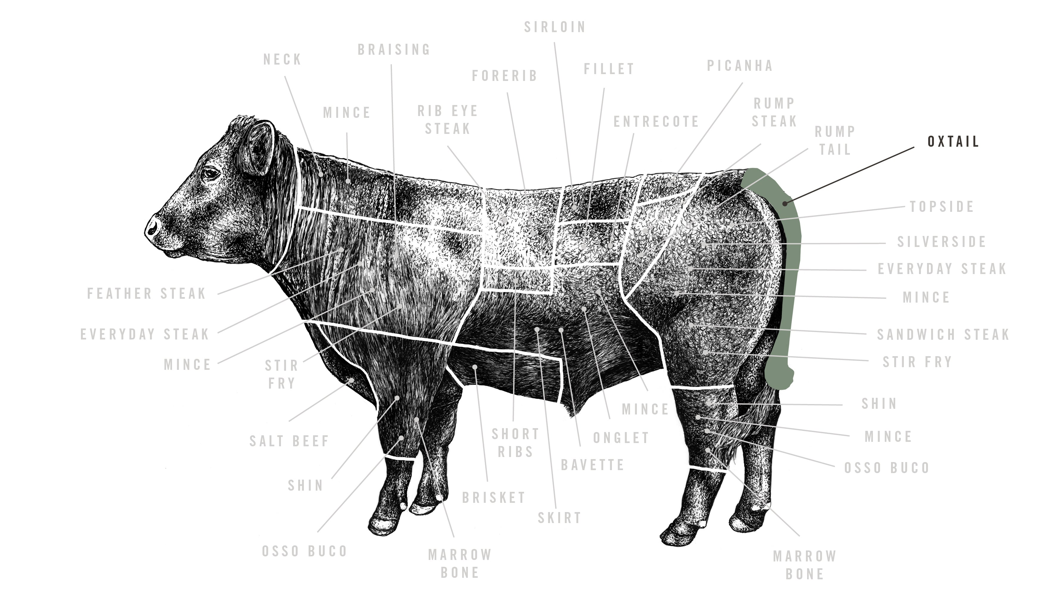 Grass Fed Beef Oxtail meat cuts diagram