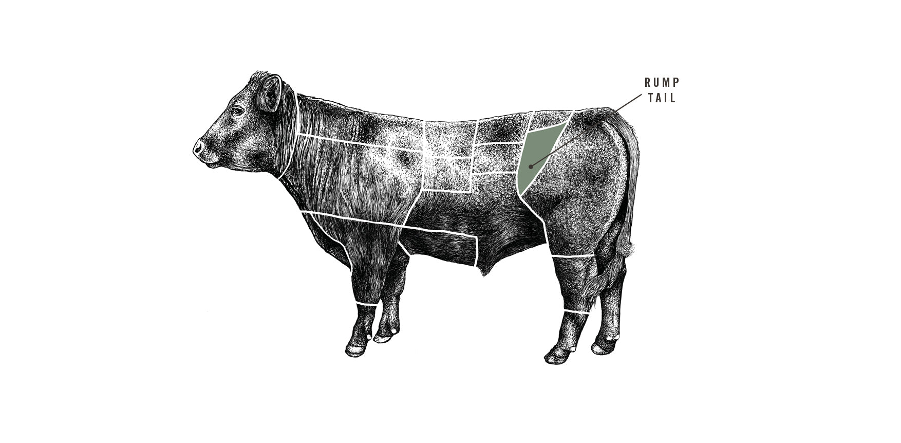 Grass Fed Beef Rump Tail meat cuts diagram