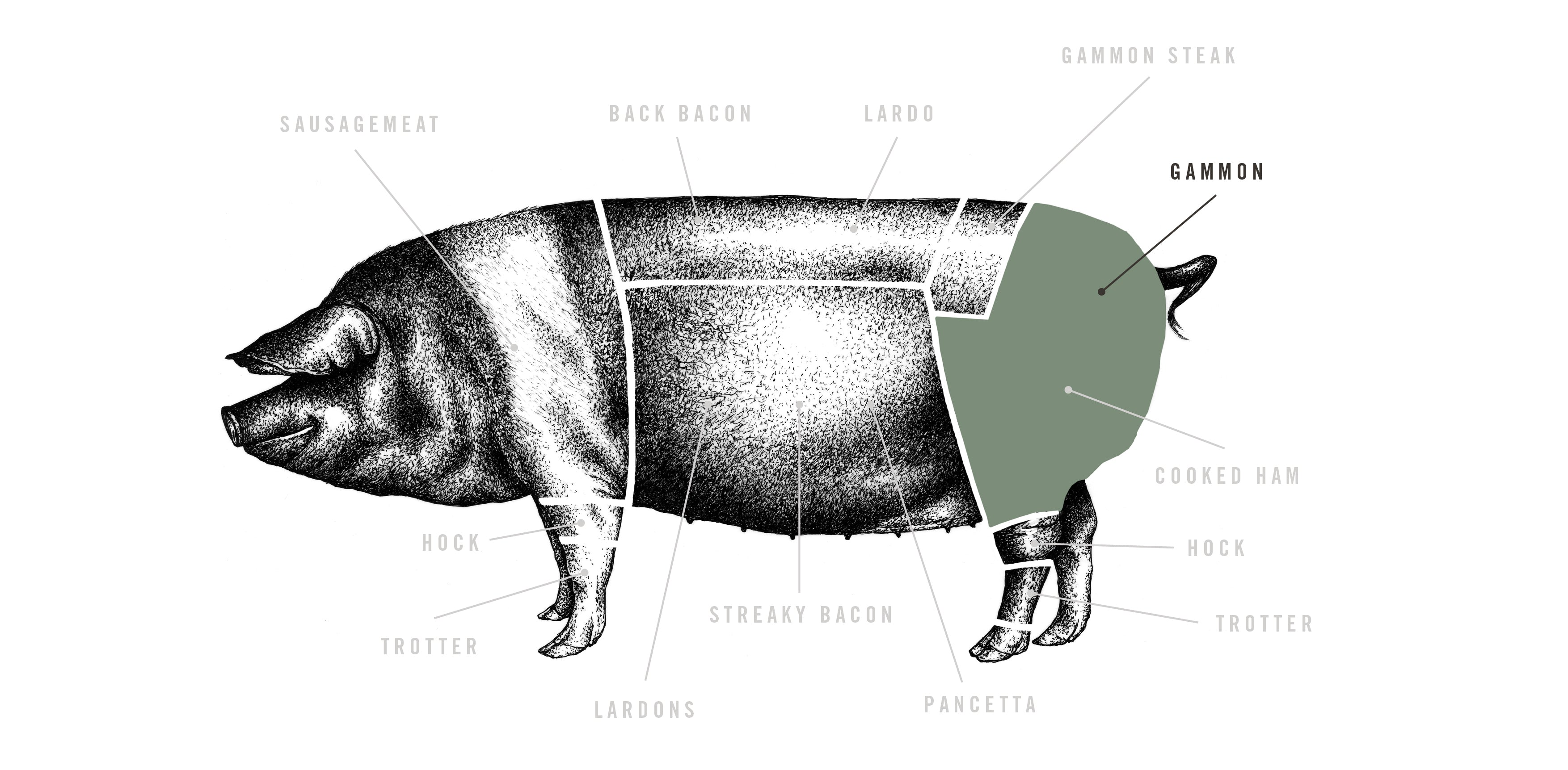Saddleback Whole Ham meat cuts diagram