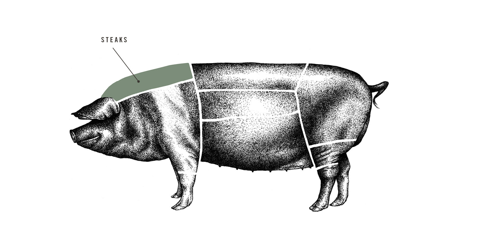 Saddleback Pork Steaks meat cuts diagram