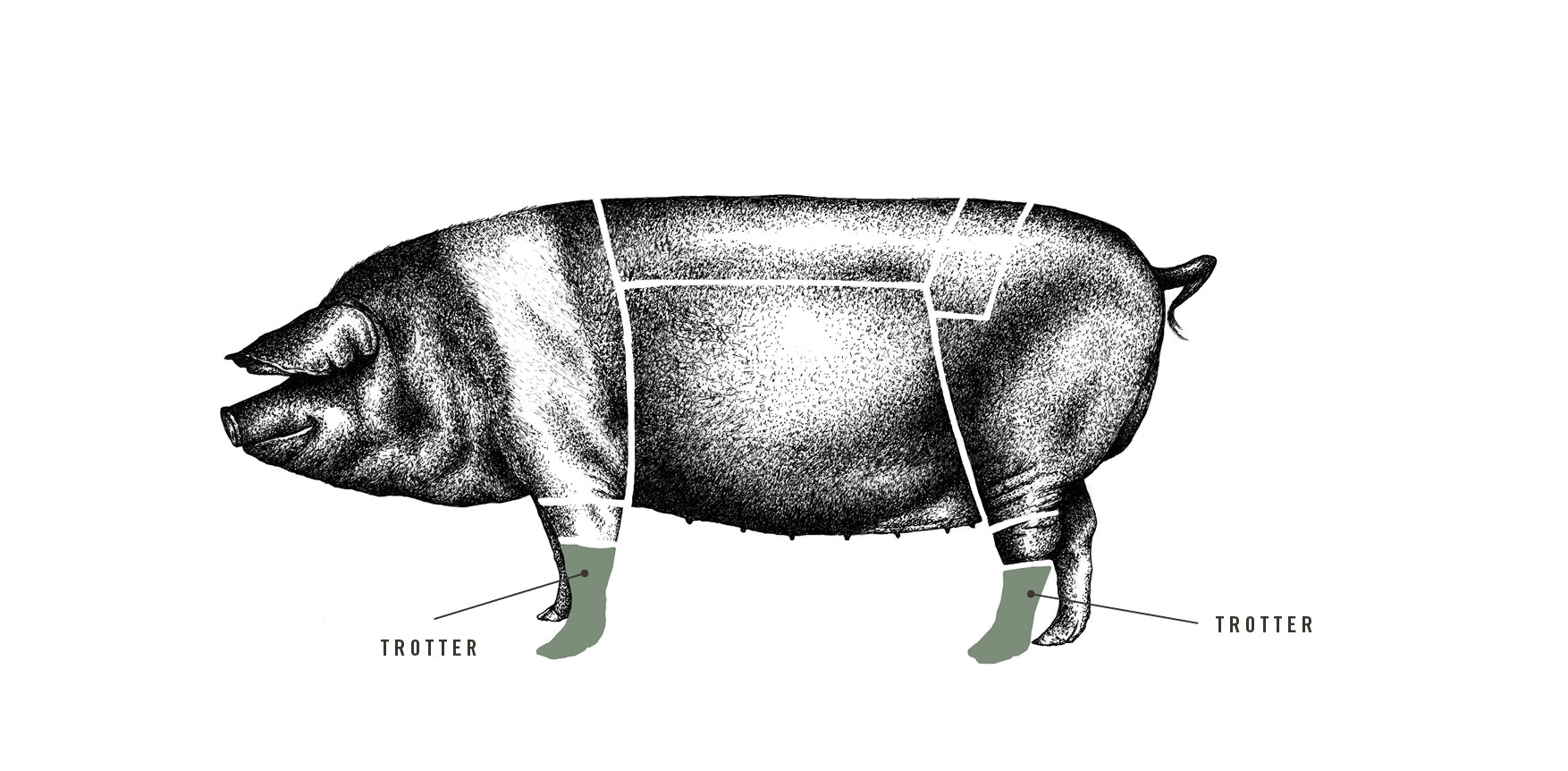 Saddleback Pig's Trotter meat cuts diagram