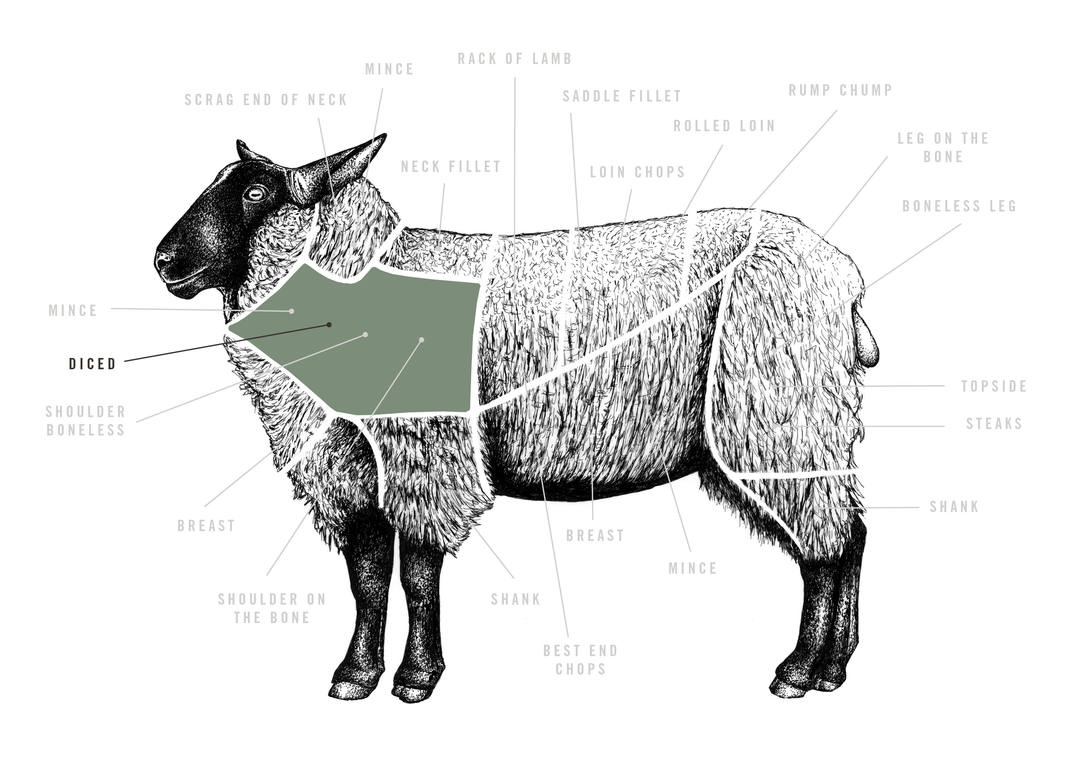 Diced Lamb meat cuts diagram