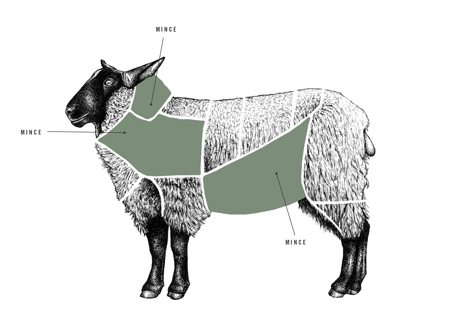 Lamb Mince meat cuts diagram