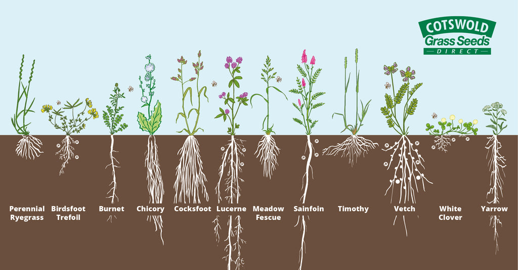 Root profiles for soil fertility enhancing grasses and herbs